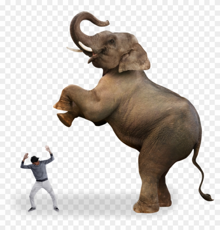 Ftestickers Man Scared Angryelephant Elephant Indian Elephant Clipart 3645590 Pikpng   # elephant png & psd images. ftestickers man scared angryelephant