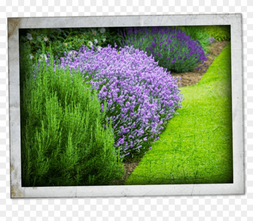 Our Plant Experts Can Help Select The Right Plants - Plants Clipart #3749865