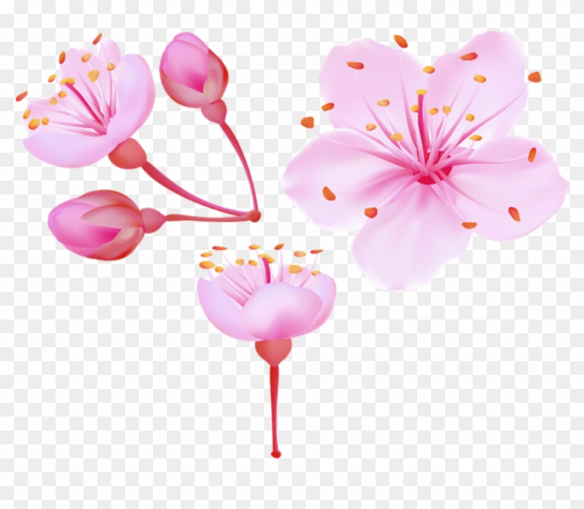 Free Png Download Spring Cherry Blossoms Png Images - Cherry Blossom Flower Png Clipart #389675