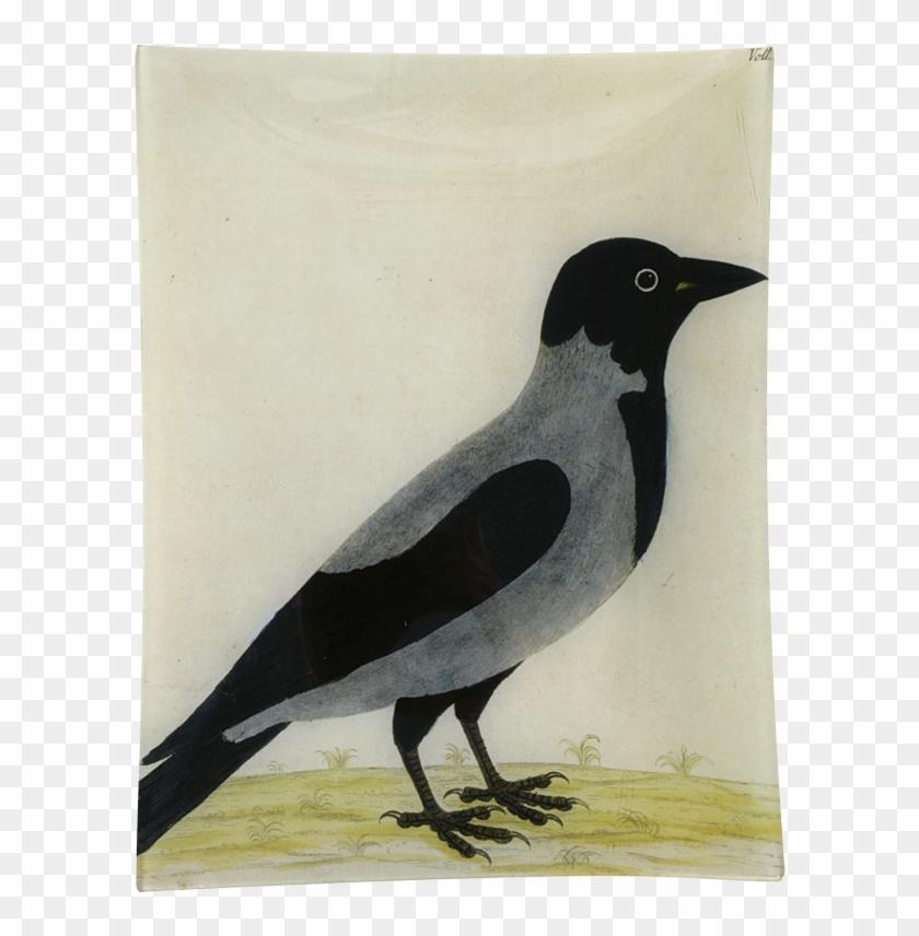 Royston Crow John Derian Company Inc - Crow Clipart #3844920
