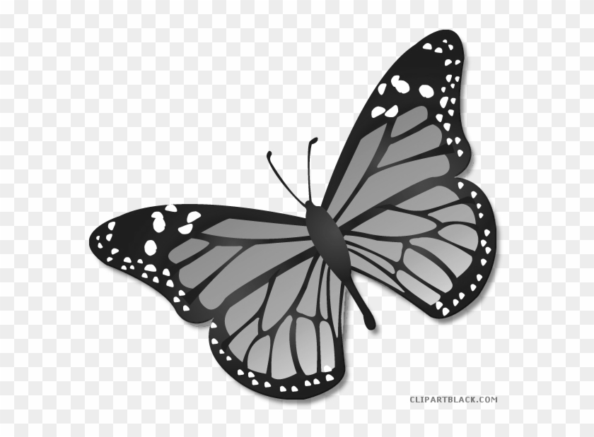 Monarch Butterfly Clipart Black And White - Transparent Background Monarch Butterfly Clipart - Png Download@pikpng.com
