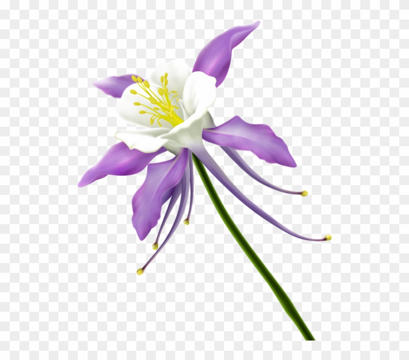9b05cb0a Tube, Clip Art, Photoshop, Flowers - Columbine Flower Clipart - Png Download #3926525