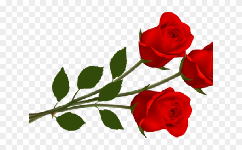 Rose Png Hd Images Download Clipart 3959947 Pikpng