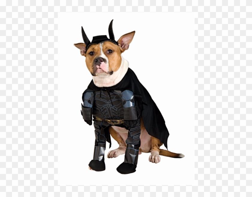Dog In Batman Costume Costume Model Ideas - Superhero Dog Costume Clipart #3974280