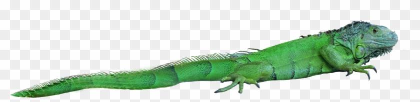 Lizard Png - Png Lizard Clipart #41190