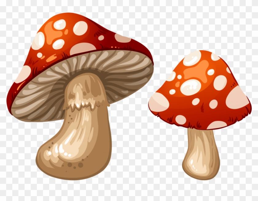 Free Png Download Mushrooms Clipart Png Photo Png Images - Transparent Background Mushroom Clipart Transparent #46030