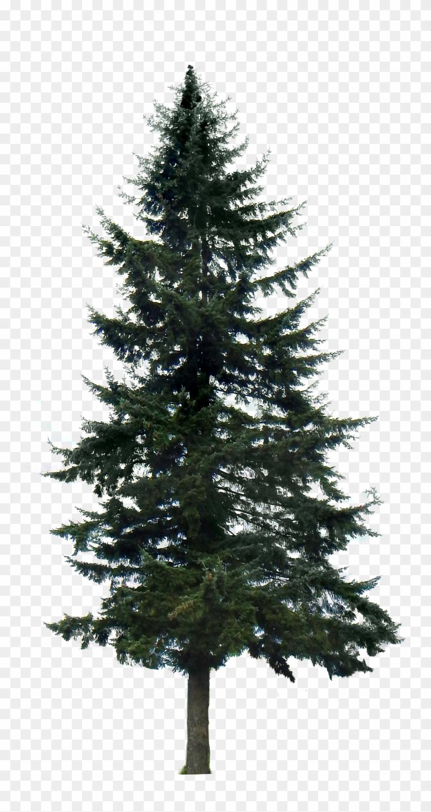 Google Search Tree Render, Tree Psd, 10 Tree, Tree - Pine Tree Png Transparent Clipart #47712