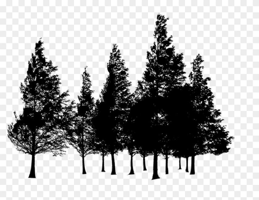 Forest Silhouette - Png Transparent Forest Png Clipart #48949