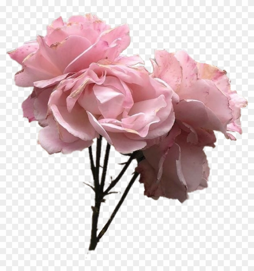 Vintage Pink Rose Flower Tumblr Pinkflower Pinkrose
