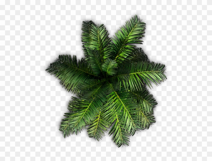 551 X 561 11 - Top View Tree Png Clipart #425939