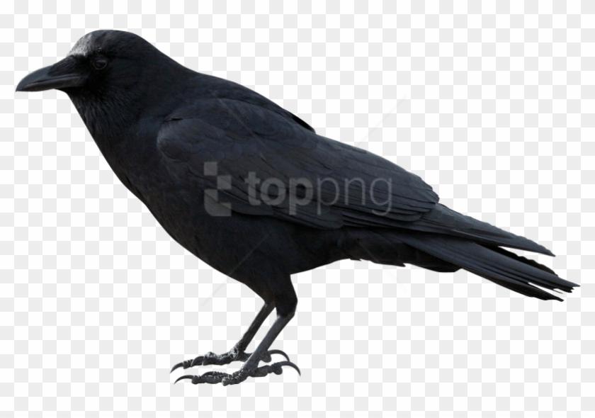 Free Png Crow Png Images Transparent - Crow Transparent Clipart #4232645