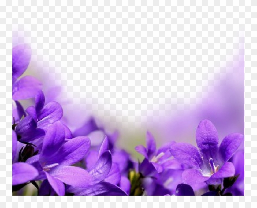 759 X 600 6 - Purple Flowers Borders Png Clipart #430453