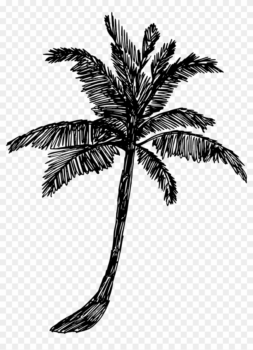 Free Download - Palm Tree Drawing Png Clipart #434003