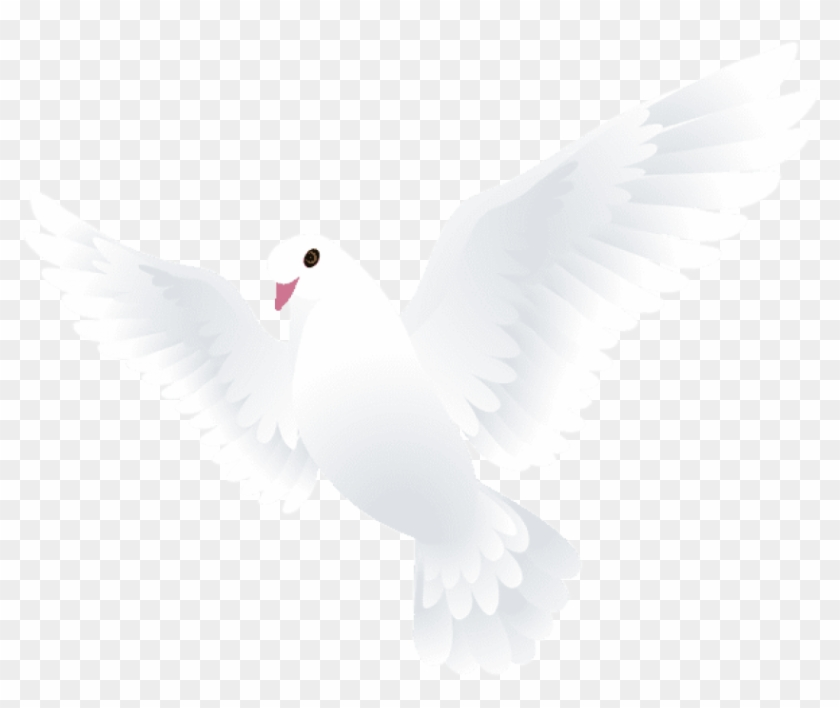 Free Png Download Dove Transparent Png Images Background - Kabutar Png Clipart@pikpng.com