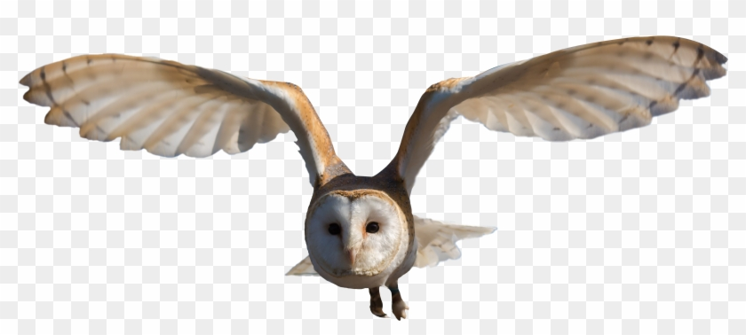 Owl Png, Bird Flying, Png Photo - Barn Owl Png Clipart #440529