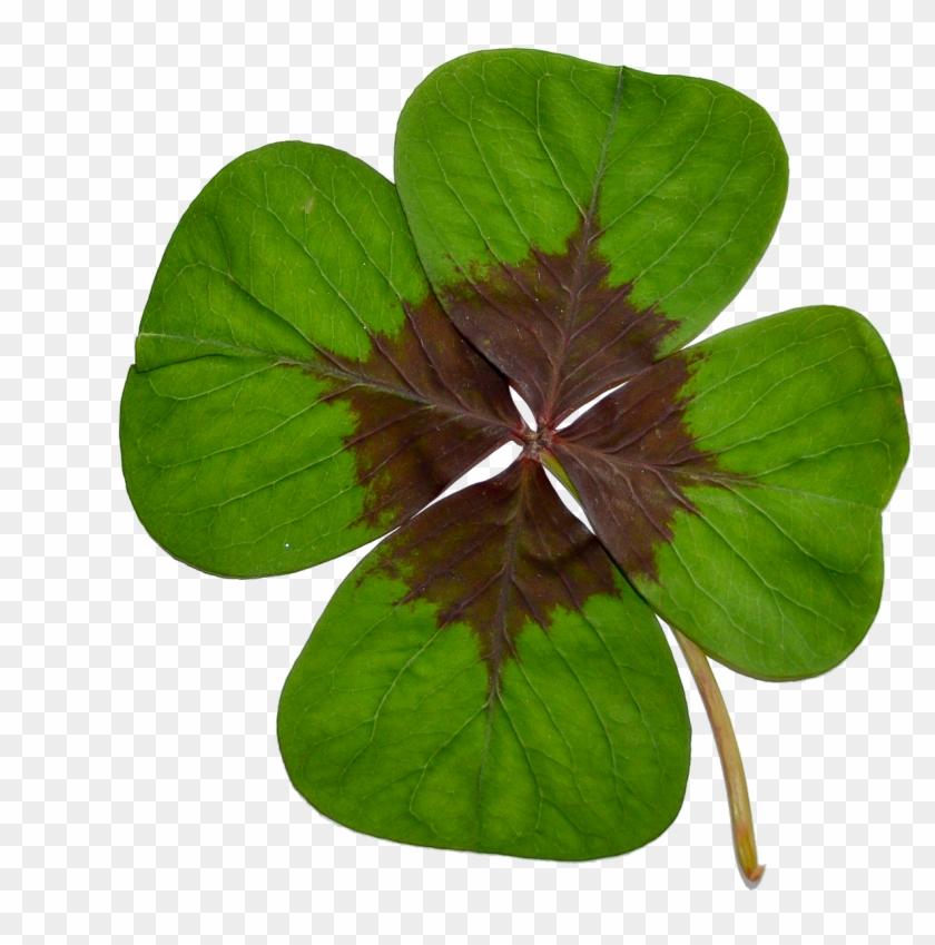 Verwonderend Four-leaf Clover Luck Green - Klavertje Vier Png Clipart (#459007 IH-35