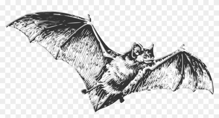 Vampire Bats Clipart Image: Scary Bats Flying Through the Sky on Halloween  Night | Halloween silhouettes, Scary clips, Halloween clipart
