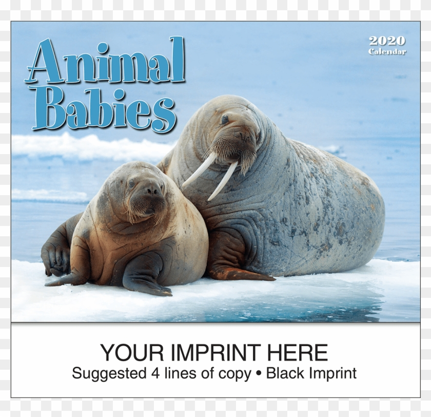 Picture Of Animal Babies Wall Calendar - 生活 在 北极 的 动物 Clipart #4536821