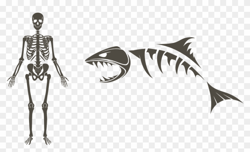 Shark Skeleton Drawing Clipart@pikpng.com