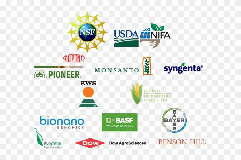 Interested In Becoming A Sponsor Of The Maize Genetics - National Science Foundation Clipart #4587496