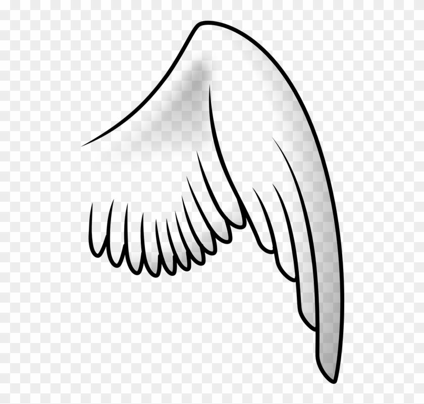 Asa De Anjo Desenho Png Bird Wing Clipart Transparent Png