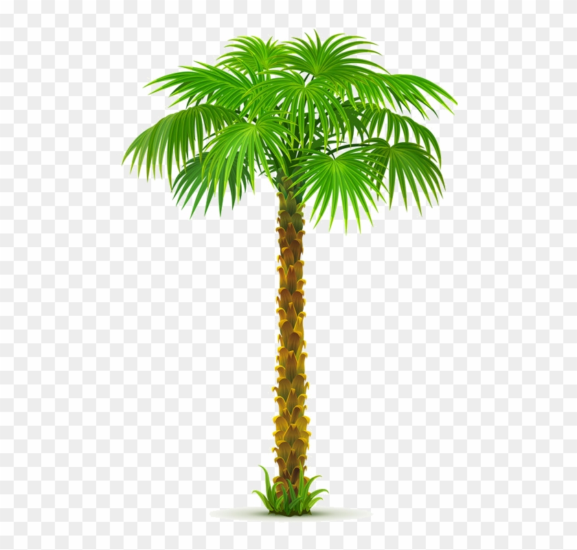 Arbre,png Palm Tree Png, Palm Trees, Palm Tree Pictures, - Sea And Coconut Tree Vector Clipart #464240