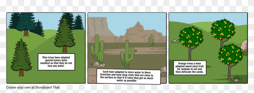 Pine Trees Have Adapted Special Leaves - Hedgehog Cactus Clipart #4632518
