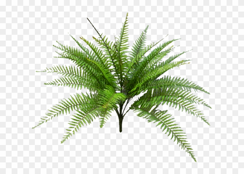 Tropical Fern Png Svg Black And White Download - Fern Palm Png Clipart@pikpng.com