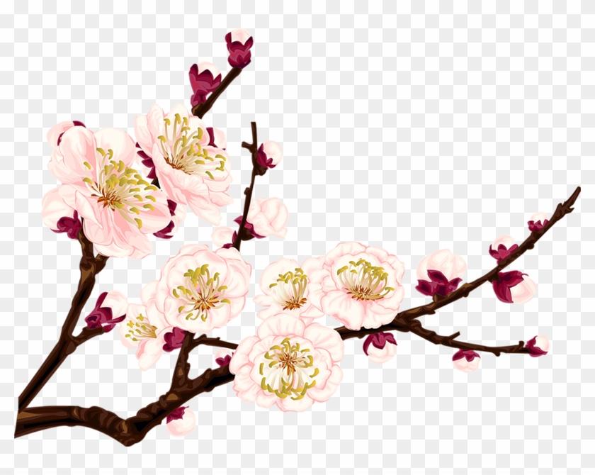 #tumblr #flower #flowers #branch #branchs - Apricot Blossom Png Clipart #4756425