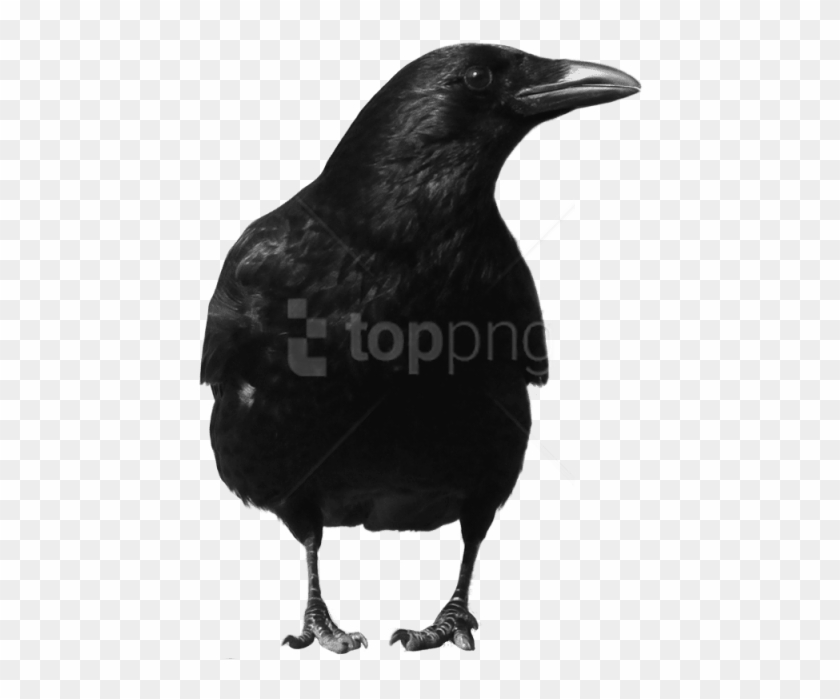 Free Png Download Crow Large Front Png Images Background - Crow Png Clipart #4791959