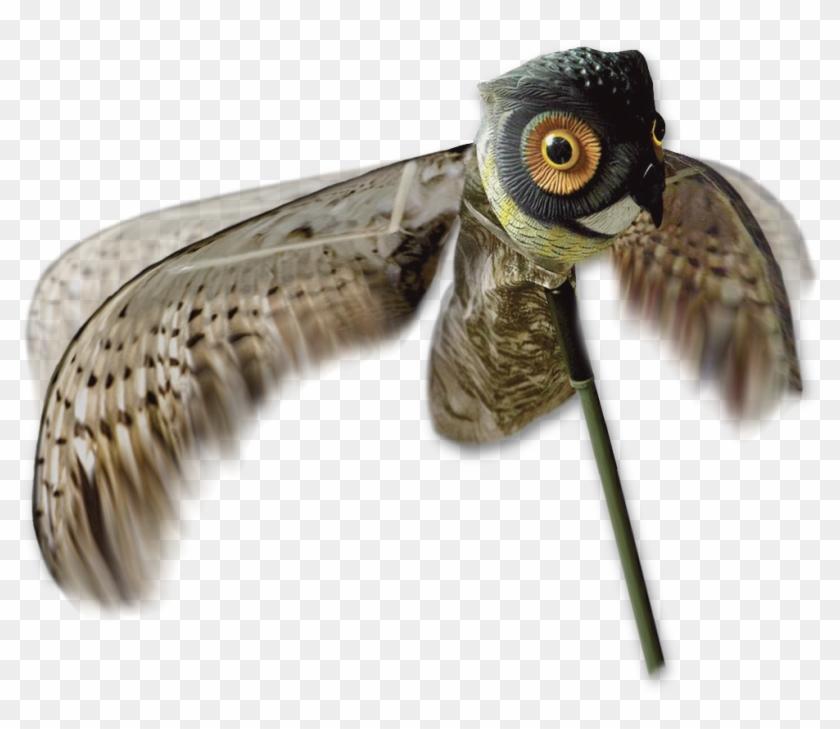 Home / Decoys / Crow Hunting Decoys - Shorebird Clipart #4792278