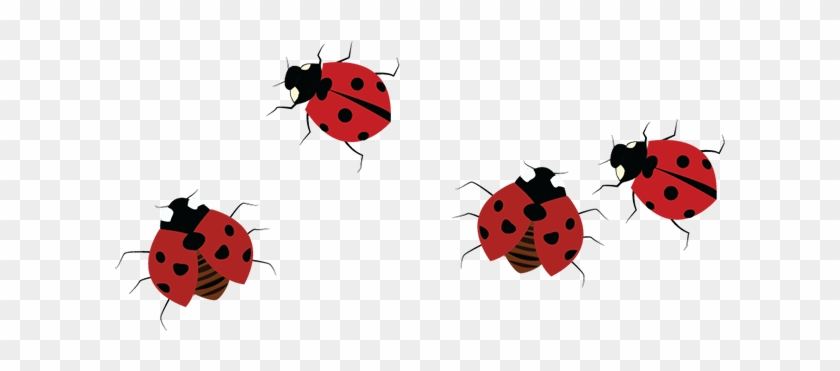 Also, Many People Find Them Disgusting Because Their - Ladybug Clipart #4795418