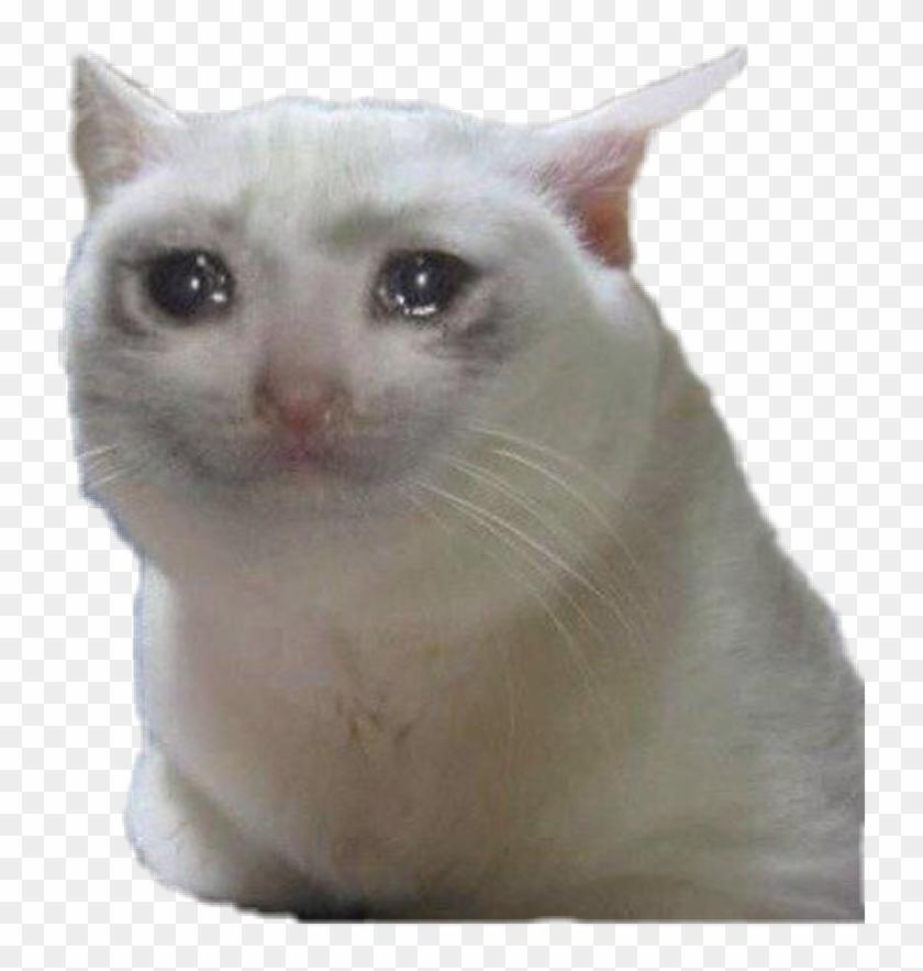 Download Sadcat Sticker - Sad Cat Meme Png Clipart Png ...