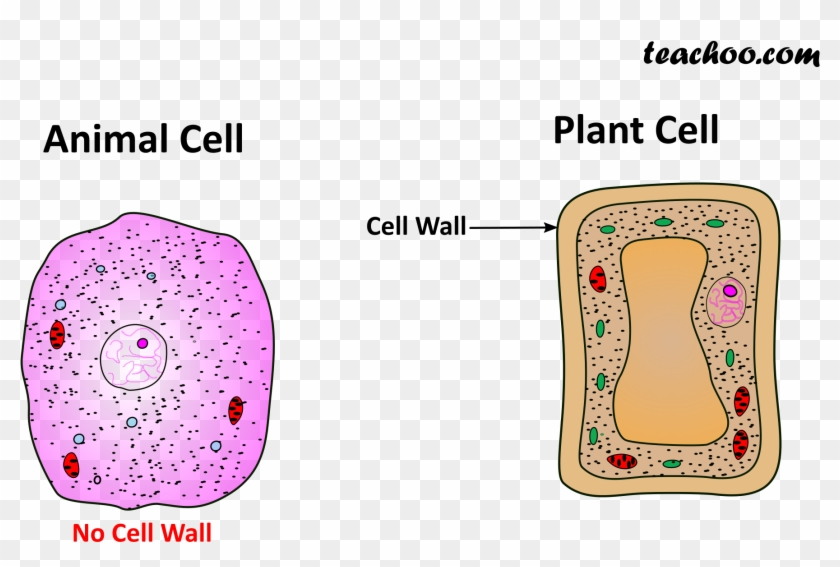 Both Plant And Animal Cell Wall - Java Virtual Machine Clipart #4825578