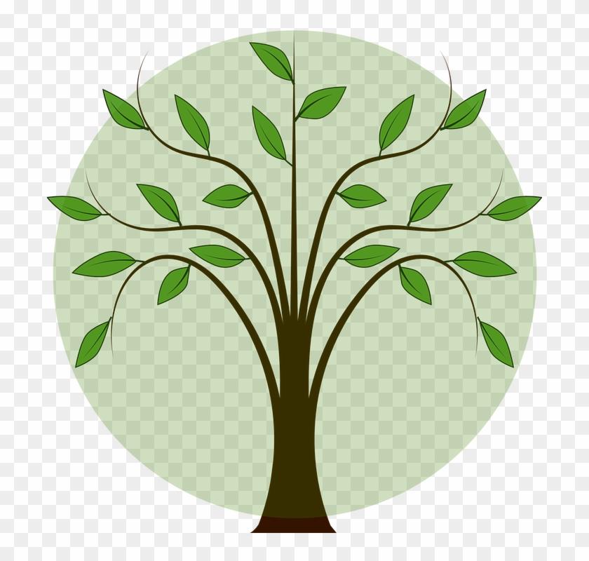 Branch Leaf Tree Illustration, PNG, 600x600px, Branch, Clip Art, Color,  Drawing, Flora Download Free