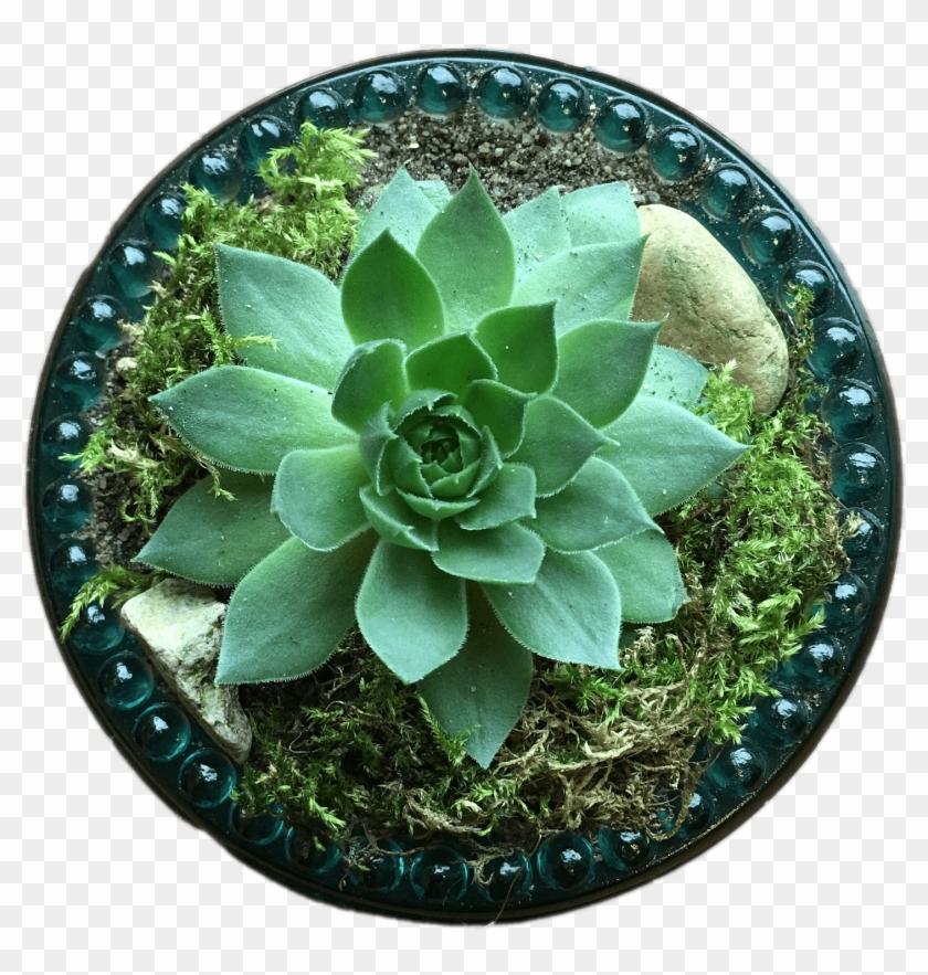 Nature - Succulent Plant Clipart #490250