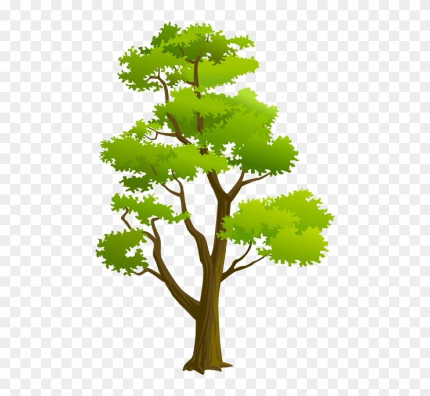 Free Png Download Tree Png Png Images Background Png Arvores Png