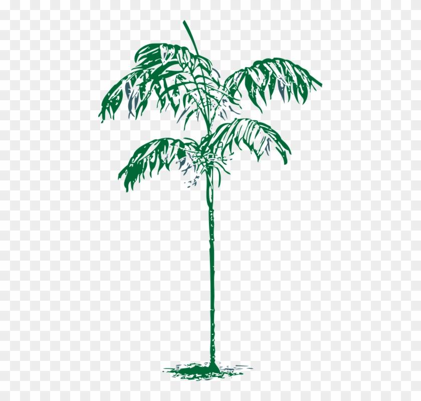 Palm Tree Ornamental - Attalea Speciosa Clipart #4908096