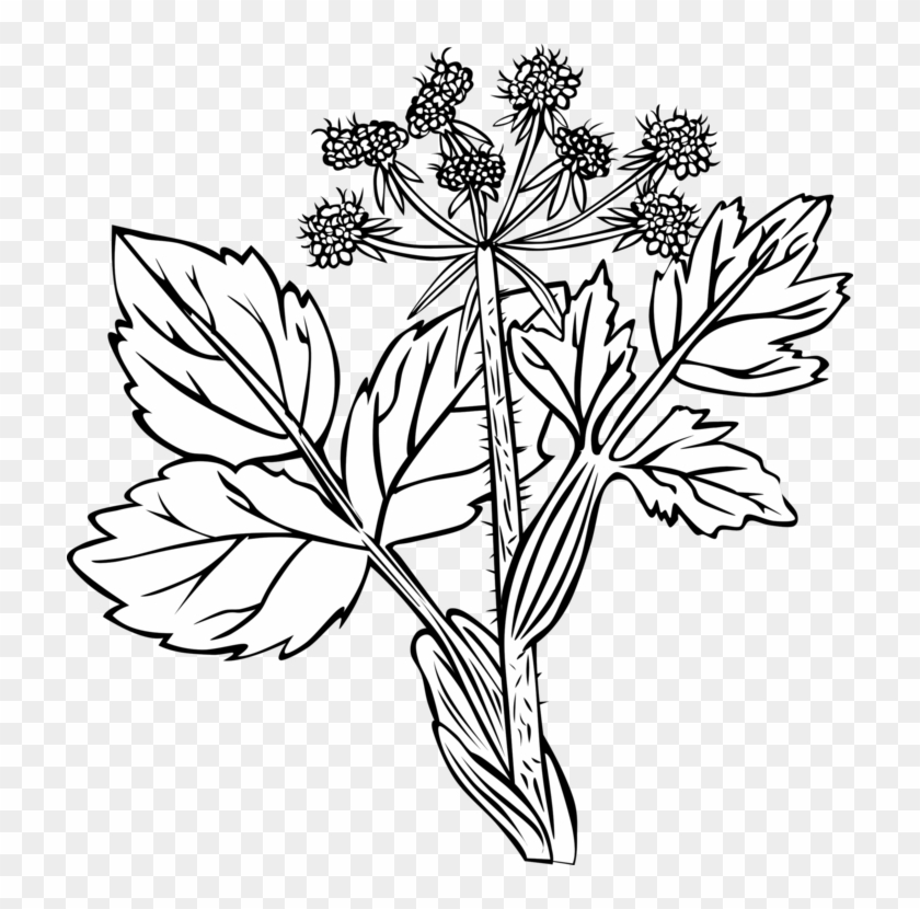 Plants White Snakeroot Flower Palm Trees Hedysarum - White Snakeroot Plant Drawing Clipart #4908265
