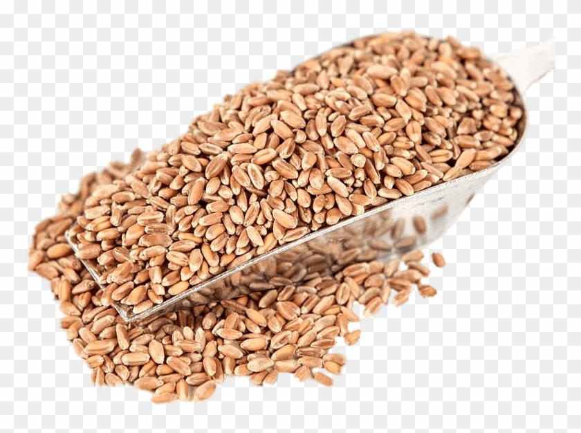 Food - Wheat Clipart #4920775