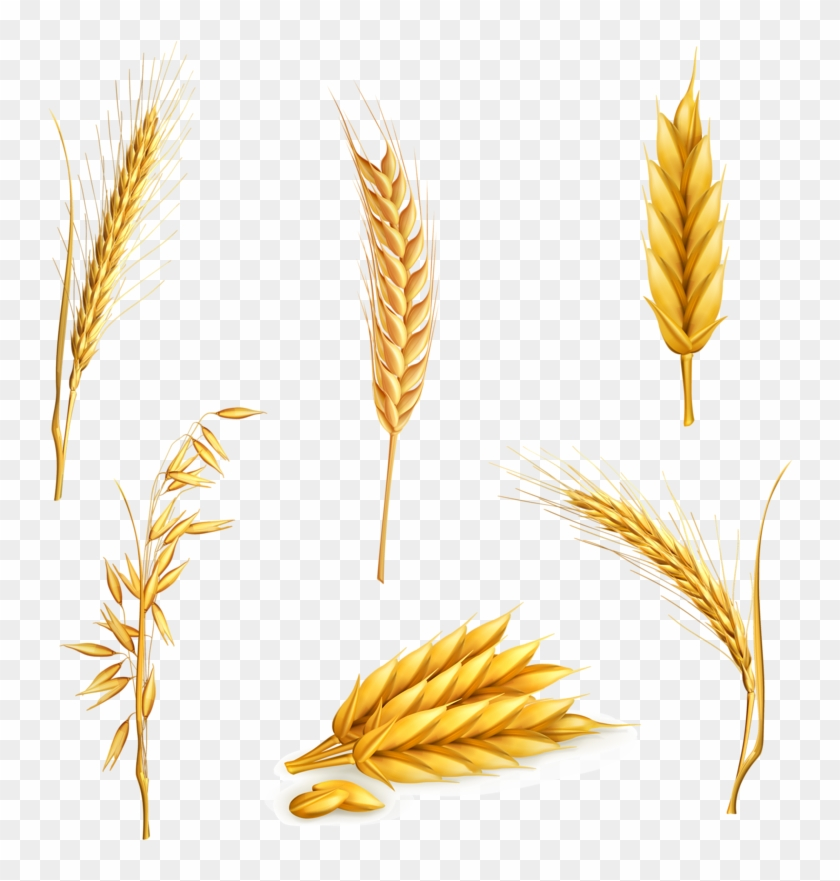 Clip Art Freeuse Library Cereal Clip Art Yellow Transprent - Stock Vector Wheat - Png Download #55808