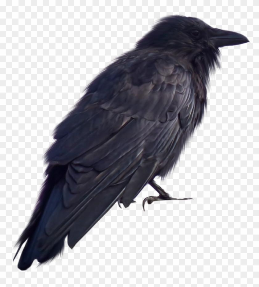 Crow Png Transparent - Crow Png Clipart #505002
