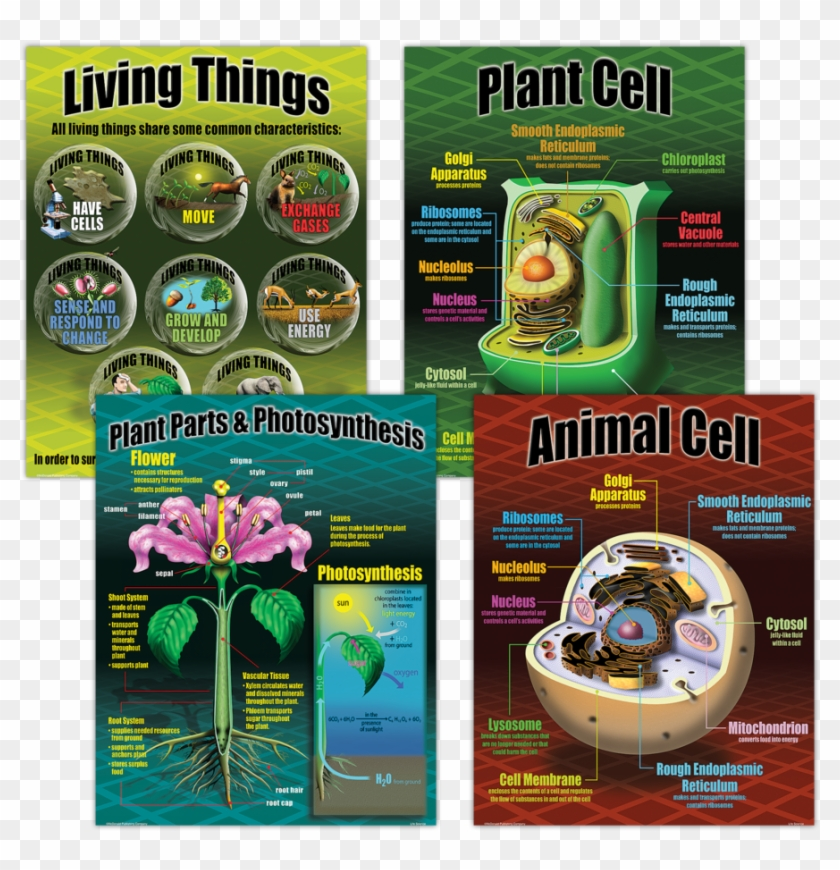 Tcrp077 Life Science Poster Set Image - Poster About Life Science Clipart #5050121