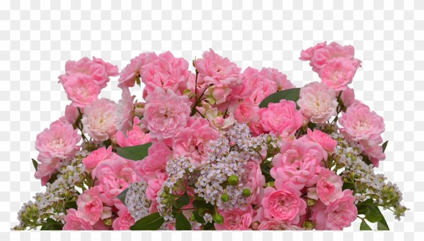 Roses,love,pink Roses,valentine\u0027s , Garden Roses Clipart