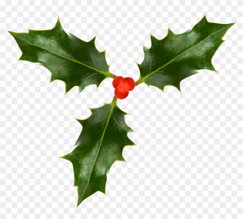 1323 X 1132 8 - Christmas Holly Png Transparent Clipart #517364