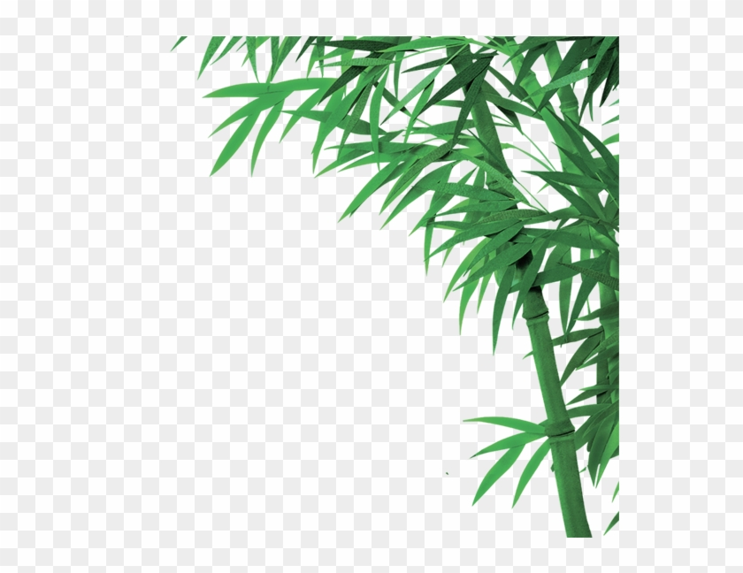 Bamboo Png, Download Png Image With Transparent Background, - Bamboo Clipart@pikpng.com