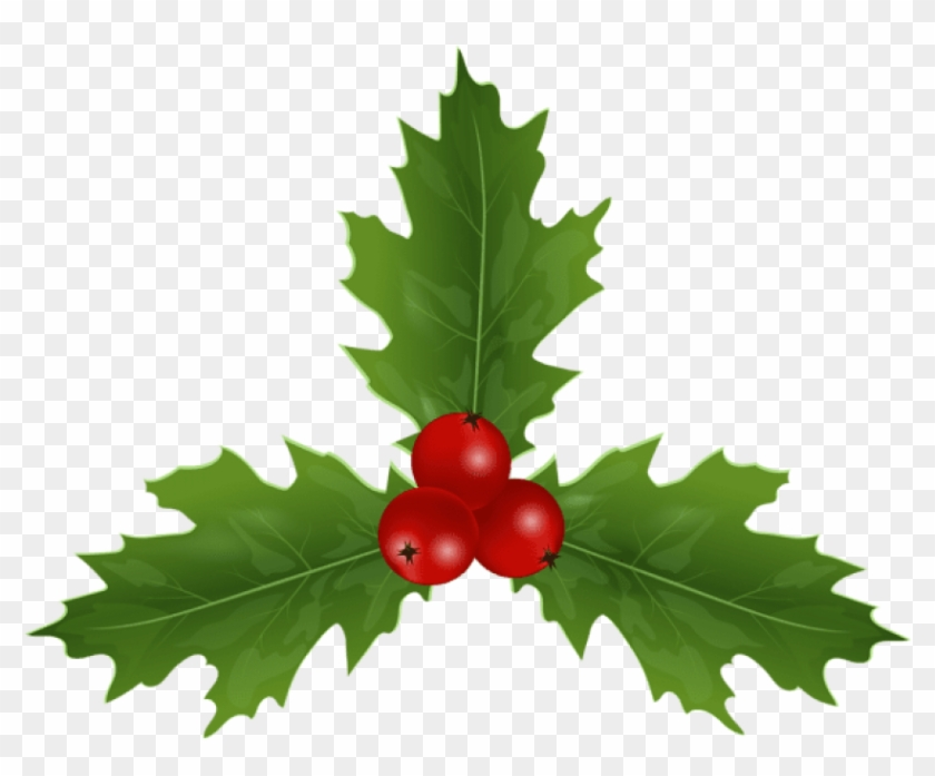 Free Png Christmas Holly Mistletoe Png Images Transparent - American Holly Clipart #518902