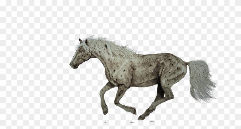 Horse Running Painting Art Png Image - Digital Horse Running Clipart #5125851