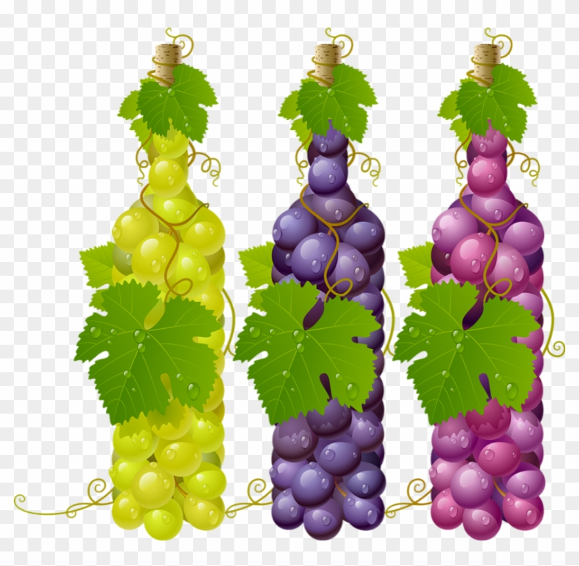 Grapes Vector Png Download Wine Grape Leaves Png Clipart 5142914 Pikpng