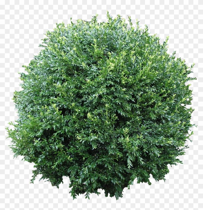 Bush Free Png Download - Bush Texture Png Clipart #523934